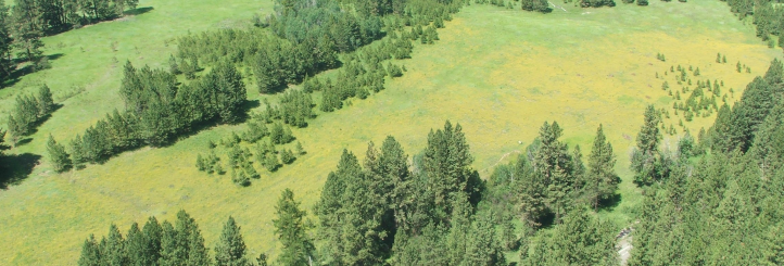 Northern Rockies Invasive Plants Council - Home